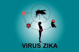 Virus-Zika-image-ecm