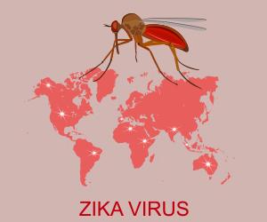 Virus Zika 2017 corso online